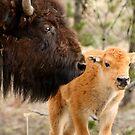Like Mama, Like Baby? by Gina Ruttle  (Whalegeek)