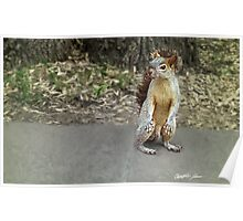 Squirrel 1 Poster