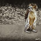 Squirrel 1 - Painted by Christopher Johnson