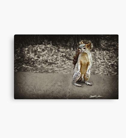 Squirrel 1 - Painted Canvas Print