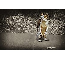 Squirrel 1 - Painted Photographic Print