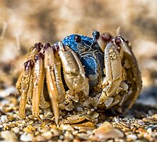 Soldier Crab ~ Hervey Bay Queensland by Scott H Murray
