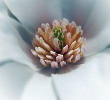 Art of magnolia by LudaNayvelt