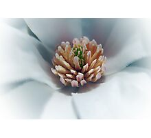 Art of magnolia Photographic Print