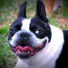 Big Smile ~ a dog's life!   by Jenni Atkins-Stair