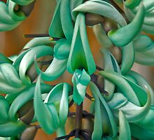 Jade vine by Sue Clamp