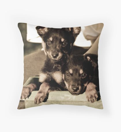 Kelpie pups Throw Pillow