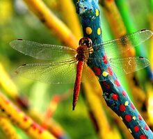 Dragonfly by Meli Fernandes by Arte Moris