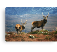 Twa Stags Canvas Print