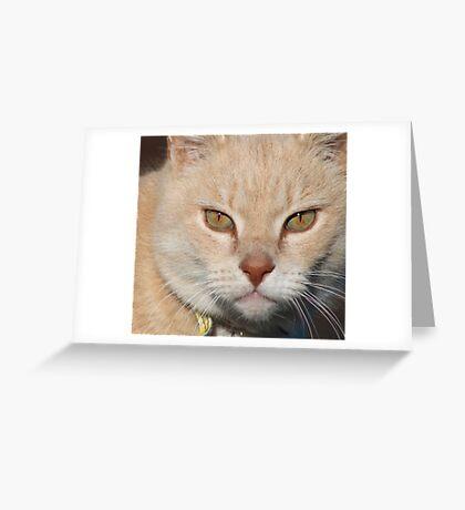 Puss Puss Greeting Card