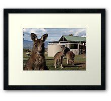 Gday Framed Print