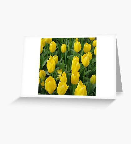 Golden Tulips Greeting Card