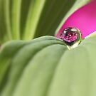 A little touch of pink by Melinda Gaal