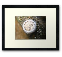 Round, White and Pretty Framed Print