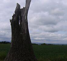 Sawn Off Tree by James  Dedman