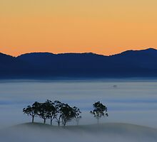 Fog of my dawn by Donovan wilson