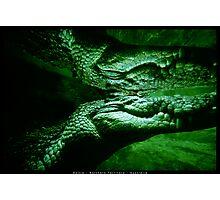 Salt Water Crocodile Reflection Photographic Print