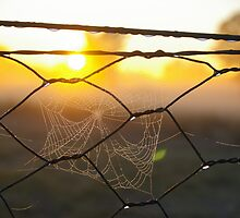 dewdrops and spiderwebs by leanimal