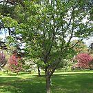 Just A Simple Tree by Linda Miller Gesualdo