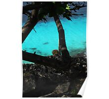 Bonaire  Cliff Side Poster