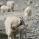 Rocky Mountain Goats by PrairieRose