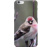 Redpoll Charm iPhone Case/Skin