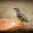 Sparrow by Kimberly Palmer