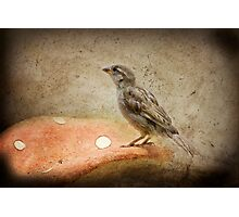 Sparrow Photographic Print