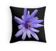 Chicory flower?  Throw Pillow