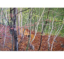 """""""Falling Leaves"""" Photographic Print"""