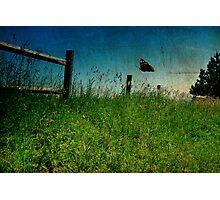 On The Breeze Photographic Print