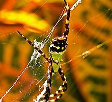 Spiderman? by Jeff Blanchard
