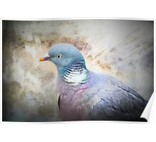 Pigeon of Peace Poster