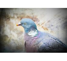 Pigeon of Peace Photographic Print