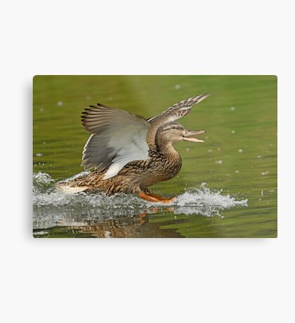 Happy Landing Metal Print