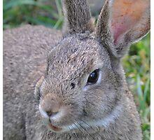 el Bunny Bandito Photographic Print