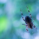 Spider hallucinations in blue by steppeland