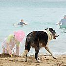 Dog Cancan by ShotsOfLove