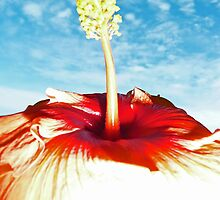 Sky Hibiscus by ShotsOfLove