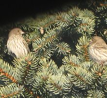 Pine House Finches I by LadyAvalon