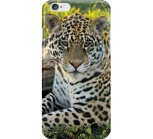 Jaguar (Panthera onca) iPhone Case/Skin