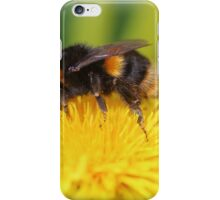 Buff-tailed Bumble Bee on Dandelion iPhone Case/Skin
