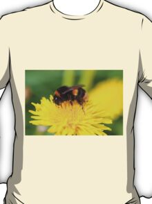 Buff-tailed Bumble Bee on Dandelion T-Shirt