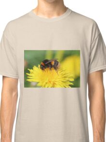 Buff-tailed Bumble Bee on Dandelion Classic T-Shirt