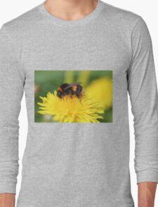 Buff-tailed Bumble Bee on Dandelion Long Sleeve T-Shirt