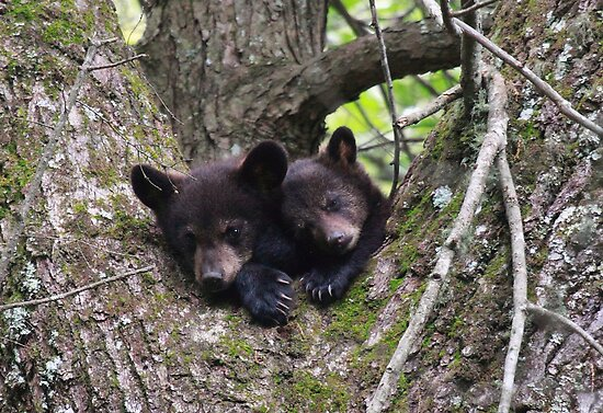 Smoky Mountain Snuggle by Chris Snyder