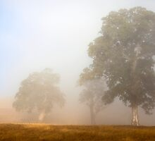 Emerging from the Fog by DawsonImages
