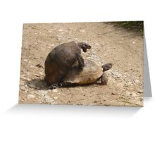 Gagging for It - Mating Turkish Tortoises  Greeting Card