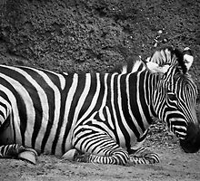 Striped Beauty by Brittany Scales