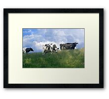 Cow Dreams Framed Print